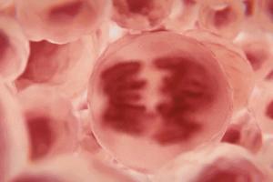 干细胞与自身免疫