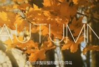 秋膘,我劝你善良!给秋膘的盒饭在这里,了解一下!| 日本整容整形翻译奇异鸟